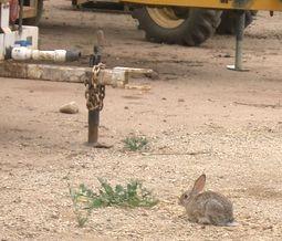 のウサギ.jpg
