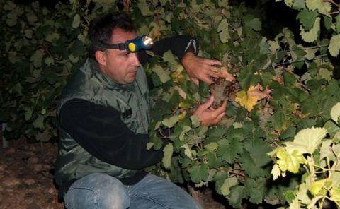 ラ・グラーヴ真夜中の収穫.jpg