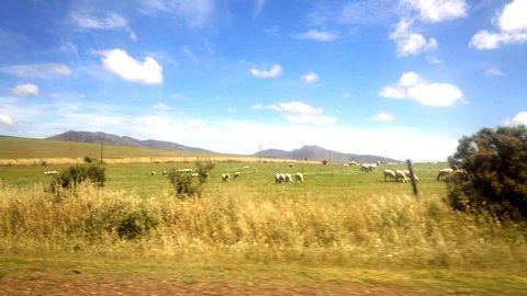南アフリカ大自然.jpg
