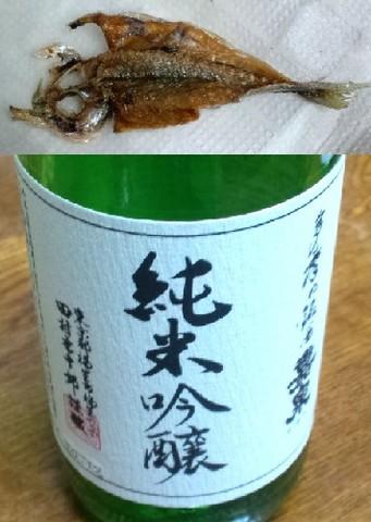 小鯵のフライとお酒.jpg
