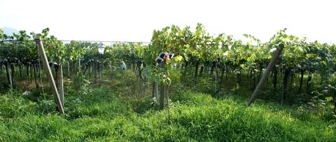 有機栽培の農園.jpg